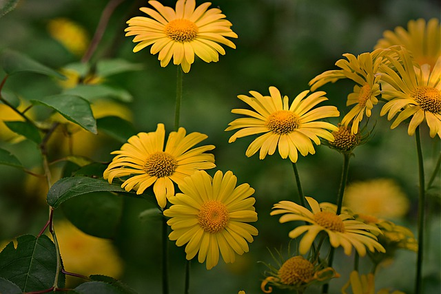 květiny.jpg